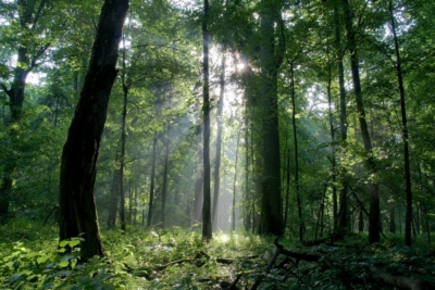 bialowieza_forest_c_tomasz_wilk_0-400x267 Latest News